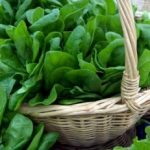What Types of Leafy Green Vegetables Should I Use in My Green Smoothie Recipe?