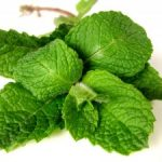 Green Smoothies With Mint